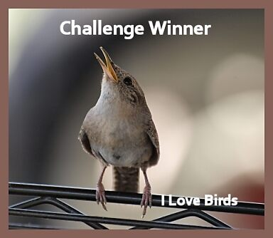 Challenge Banner  by Barb Miller