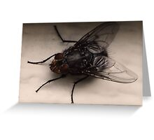 Ever wanted to be a fly on the wall? Greeting Card