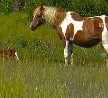 Butterfly Kisses and Foal by DelmarvaLimited