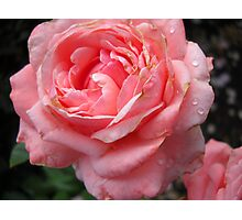 Amazing Roses # 10. Photographic Print