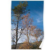 Pinetree Fall Poster