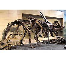 Beautiful Notoceratops Photographic Print