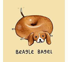 Beagle Bagel Photographic Print