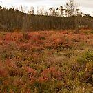 wetland by Gnangarra
