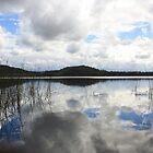 reflections on cudgen lake... by gail woodbury
