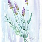 Flowers - Watercolours by Maree Clarkson by Maree Clarkson