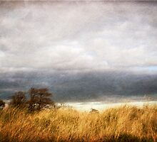 A blustery day by Nicola Smith