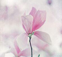 Magnolia Blossom by Bethany Helzer