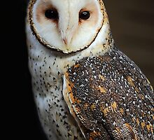 Masked Barn Owl. by Barbara  Glover