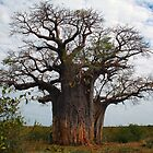 Baobab Tree, Botswana by Samantha Cole-Surjan