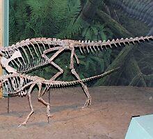 Funky Coelophysis by skeletonsrus