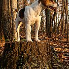 King of the Stump! by Sue Coppola
