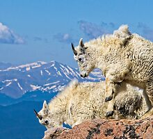 Goats by Jay Ryser