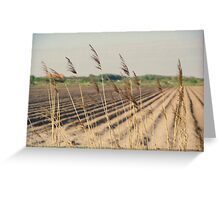 Reed in the wind Greeting Card