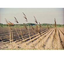 Reed in the wind Photographic Print