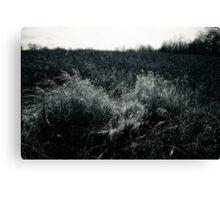 Prairie Meadow In Late Winter Canvas Print