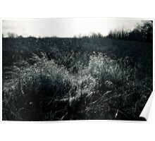 Prairie Meadow In Late Winter Poster