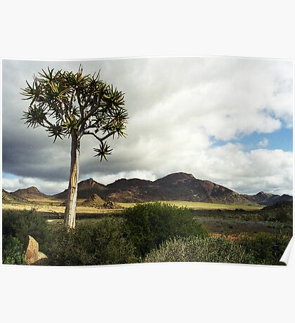 Quiver (Kokerboom) Tree - Augrabies NP Poster