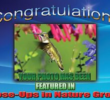 Close-Ups in Nature Group Feature Banner by TJ Baccari Photography