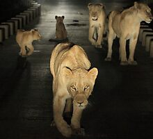 Stare down by John Banks