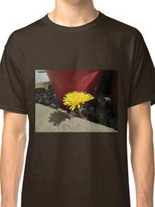 Dandelion by plant pot Classic T-Shirt