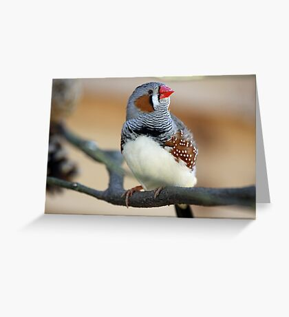If i stay really still they cant see me ........ Greeting Card