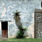 Yucca At Mission San Juan by SuddenJim