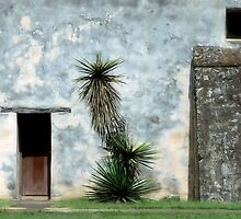 Yucca At Mission San Juan by SuddenJim