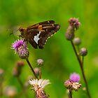 Thistle & Flutter by LeeAnne Emrick