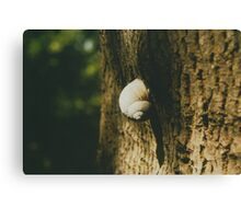 Big snail on a tree trunk Canvas Print
