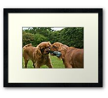 puppy fight Framed Print
