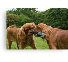puppy fight Canvas Print