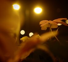 Flower On Stage by withsun