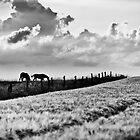 Grassing.... by Ulla Jensen