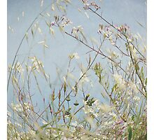 Wild Grass in Wind Photographic Print