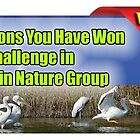 Close-ups in Nature Group Winner Banner by TJ Baccari Photography