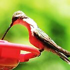 hummingbird by SusieG