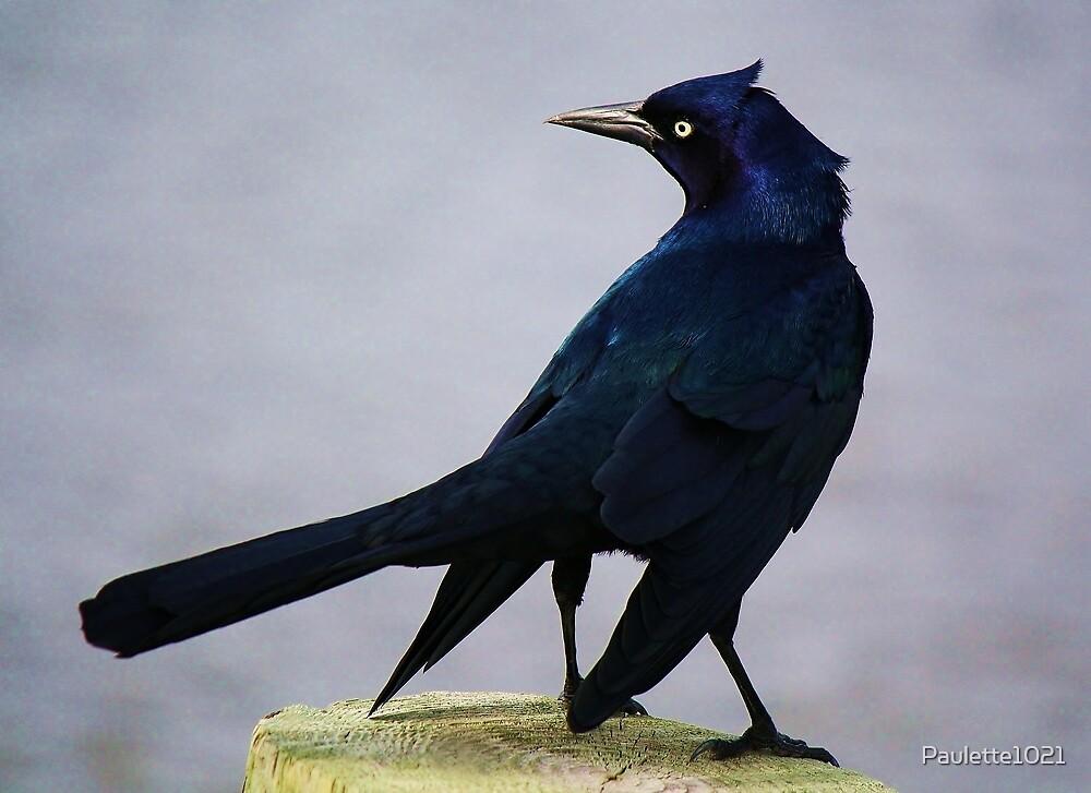 So Blue by Paulette1021