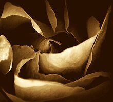 Beauty Abstract by saseoche