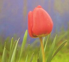 I wandered lonely as a tulip. by Fara