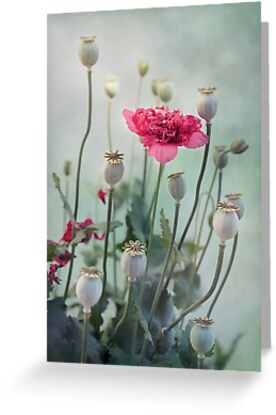 Pods, Buds and Flowers by Priska Wettstein