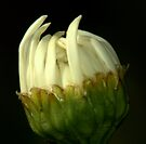 This Bud's for You! by Larry Llewellyn
