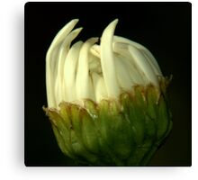 This Bud's for You! Canvas Print