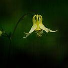 Wildflower by Pam Hogg