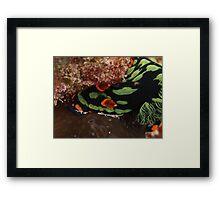 nudibranch muiron islands reef Framed Print