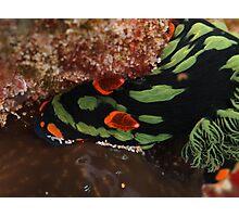 nudibranch muiron islands reef Photographic Print