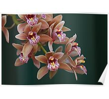 Orchids in Abundance Poster