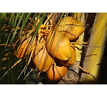 Coconuts Photographic Print