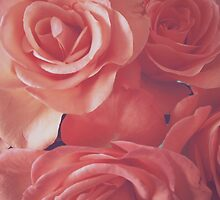 Rosey Pink by solitarysoul