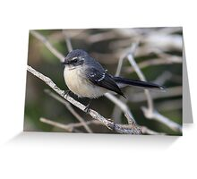 mangrove grey fantail Greeting Card